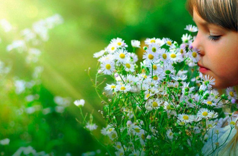 Alergias En Primavera 191 La Enfermedad Del Siglo Xxi
